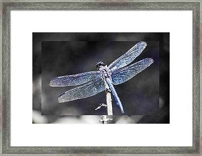 Spreading Her Wings Framed Print by Linda Segerson