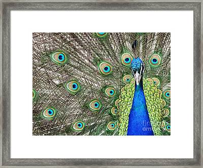Spreading Its Feathers Framed Print