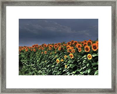 Spreading Sunshine Framed Print