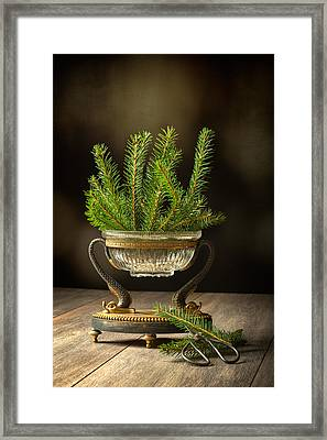 Sprigs Of Pine Tree Framed Print