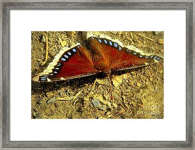 Spring ... To Life Framed Print by Tami Quigley