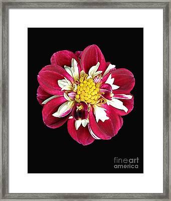 Spring 10 Framed Print by Shirley Sparks