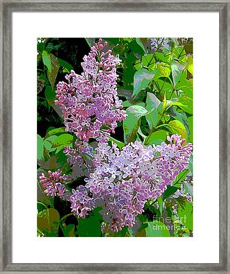 Spring 15 Framed Print by Shirley Sparks