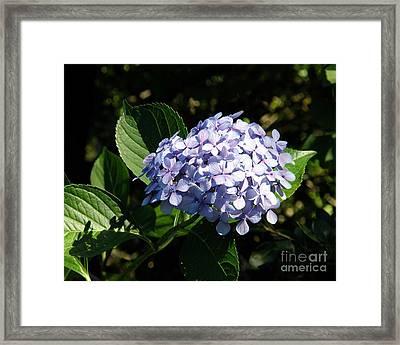 Spring 4 Framed Print by Shirley Sparks