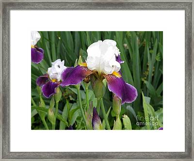 Spring 9 Framed Print by Shirley Sparks