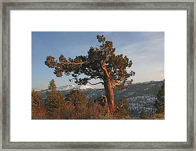 Spring Afternoon At Ebbetts Pass Framed Print