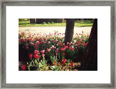 Spring Again Framed Print by Barb Baker