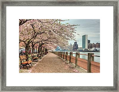 Spring Along The East River Framed Print by JC Findley