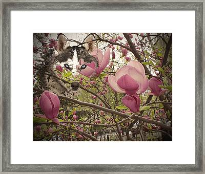 Spring And Beauty Framed Print