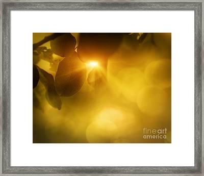Spring Apple Leaf Background Framed Print by Mythja  Photography