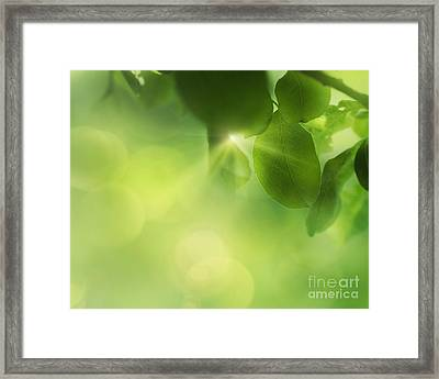 Spring Apple Leaf Background Framed Print by Mythja  Photography