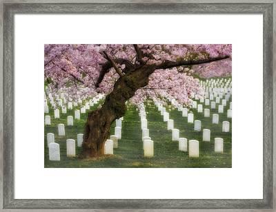 Spring Arives At Arlington National Cemetery Framed Print