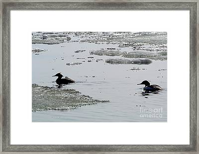 Spring Arrives Framed Print by Jari Kilpelainen
