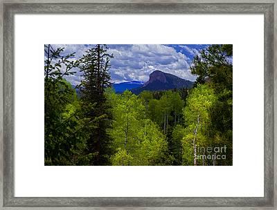 Spring Aspens Framed Print