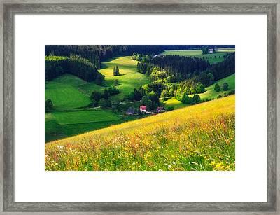 Spring At Black Forest Framed Print