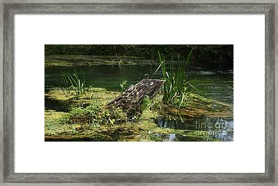 Framed Print featuring the photograph Spring At Hodgson Mill by Julie Clements