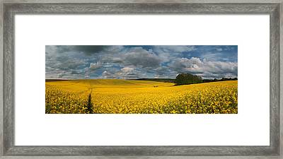 Spring At Oilseed Rape Field Framed Print