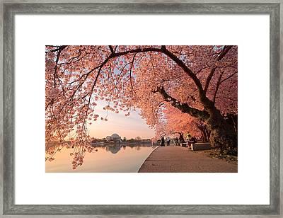 Spring Awakening Framed Print by Bernard Chen