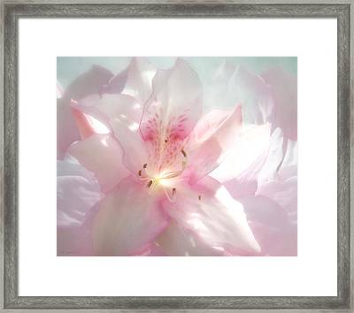 Spring Azalea Glow Framed Print