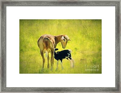 Spring Baby Framed Print by Darren Fisher