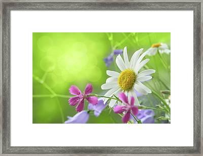 Spring Background Framed Print by Pobytov