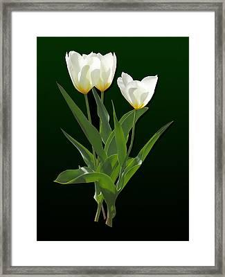 Spring - Backlit White Tulips Framed Print by Susan Savad