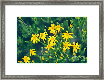 Spring Framed Print by Barbara Shallue