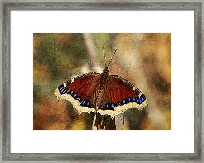 Spring Beauty Framed Print by Donna Kennedy