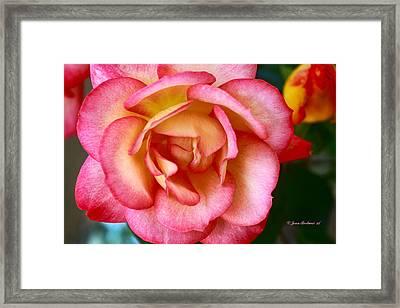 Spring Beauty Framed Print by Joan Bertucci