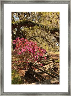 Framed Print featuring the photograph Spring Beauty by Patricia Schaefer