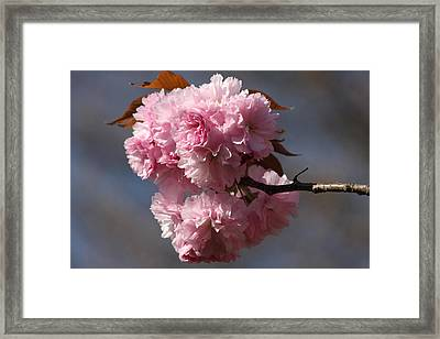 Spring Beauty Framed Print by Vadim Levin