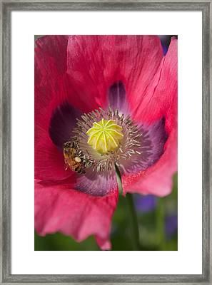 Spring Bees Framed Print by Bonita Hensley