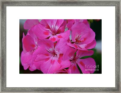 Spring Birth Framed Print