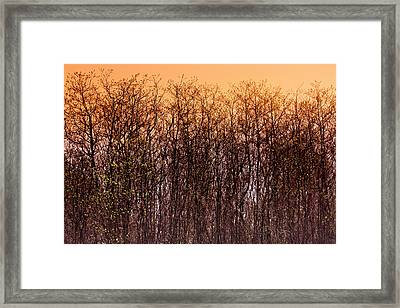 Spring Bloom Art  Framed Print