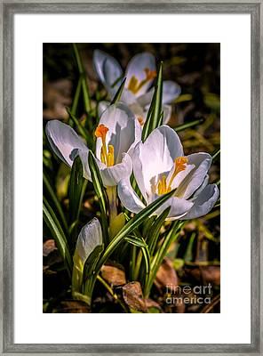 Spring Bloom Framed Print by Julie Palencia