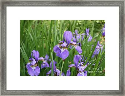 Spring Bloom Framed Print by Paul Cammarata