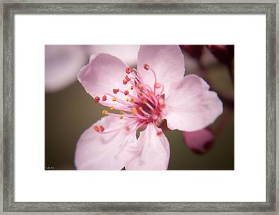 Spring Blooms 6697 Framed Print by Timothy Bischoff