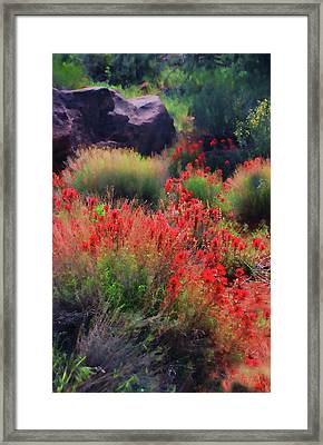 Framed Print featuring the photograph Spring Blooms by Barbara Manis
