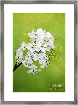 Spring Blooms Framed Print by Darren Fisher