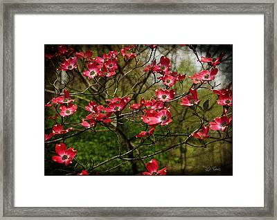 Framed Print featuring the photograph Pink Spring Dogwood Blooms  by James C Thomas