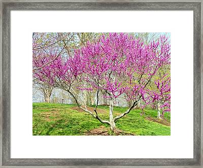 Spring Blooms Framed Print by Kay Gilley