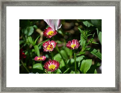 Framed Print featuring the photograph Spring Blooms by Tara Potts