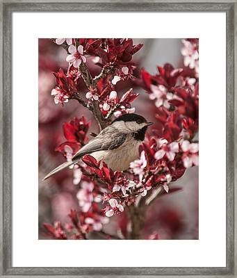 Spring Blossom Chickadee Framed Print