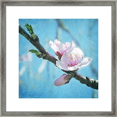 Framed Print featuring the photograph Spring Blossom by Jocelyn Friis