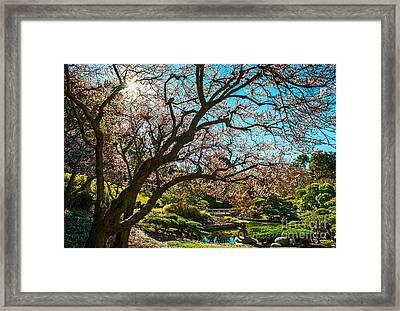 Spring Blossom Star Framed Print by Jamie Pham