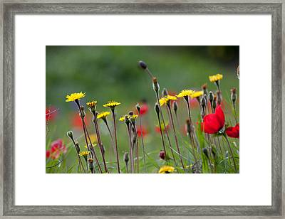 Framed Print featuring the photograph Spring Blossom by Uri Baruch