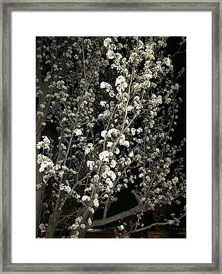 Spring Blossoms Glowing Framed Print