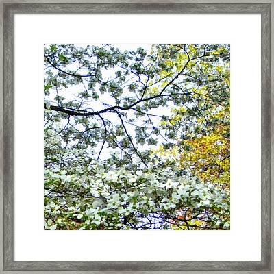 Spring Blossoms Framed Print by Michelle Calkins