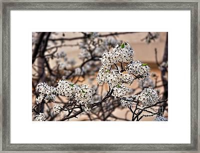 Spring Blossoms On Peach Bokeh By Kaye Menner Framed Print