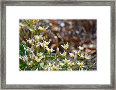 Spring Blossoms Framed Print by Sonali Gangane